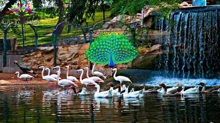 агадир парк птиц